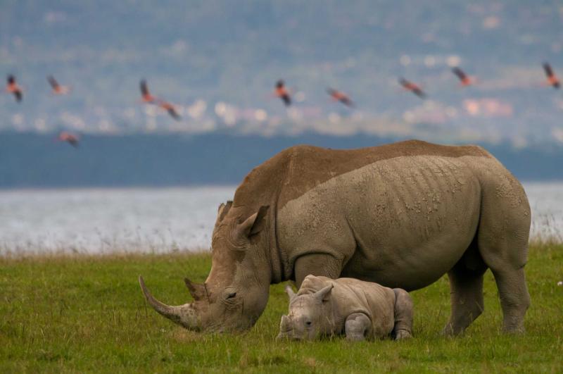 7 Days In Kenya Tour Maasai Mara Lake Nakuru Lake