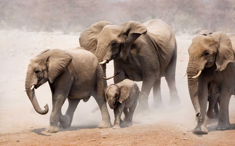 Following the Elephants: Luxury Botswana Safari for ...