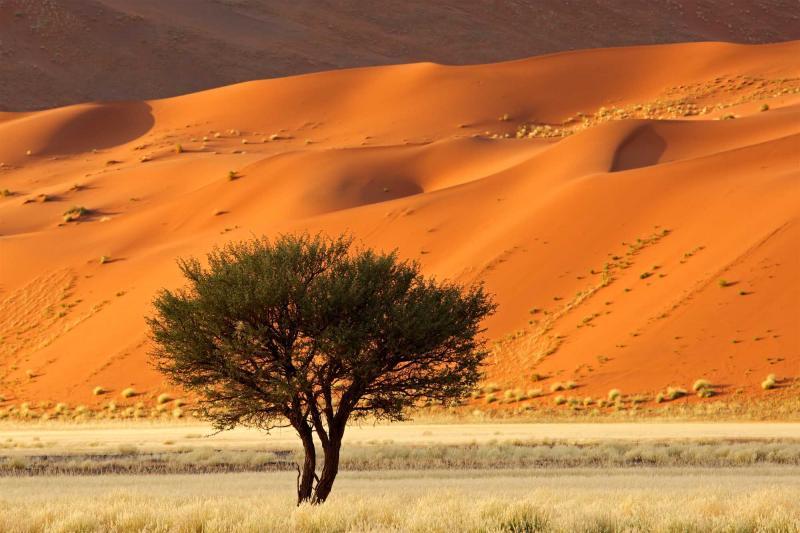 Ultimate Namibia And Botswana Desert Safari Zicasso