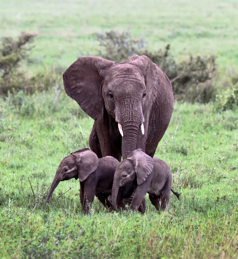 Romantic Tanzanian Safari For Couples Zicasso