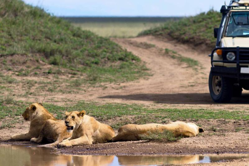 Boost Near Me >> Exclusive Serengeti Horse Riding Safari Expedition   Zicasso