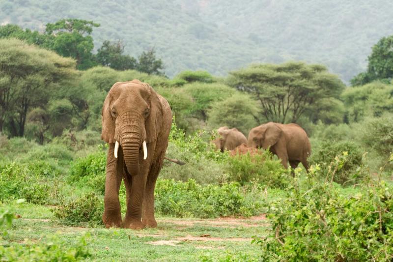 The Great 12 Day Tanzania Safari Package Zicasso