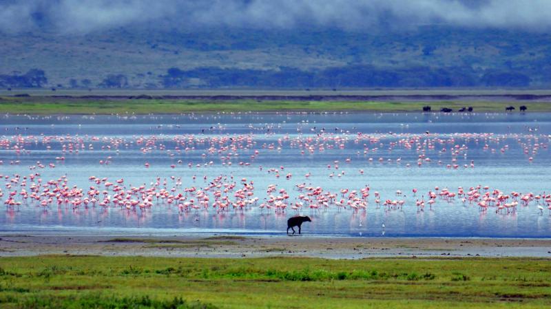 7 Day Tanzania Safari Tour Serengeti Ngorongoro Crater Lake