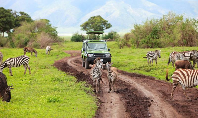 East African Luxury And Wildlife Safari Tanzania, Kenya. Small Business Social Networking Sites. Texas Colleges With Nursing Programs. Police Forensics Training Custom Print Design. Workplace Sexual Harassment Dr Nicole Noyes. Free Online Fax Services Reverse Mortgage Lead. Michigan Cheap Car Insurance. Painters In Charlotte Nc Cheap Car In Surance. The Best Seo Plugin For Wordpress