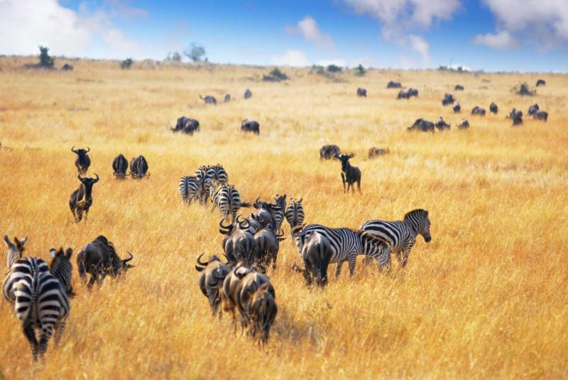 Grasses amp Grazers of Botswana and the surrounding savanna