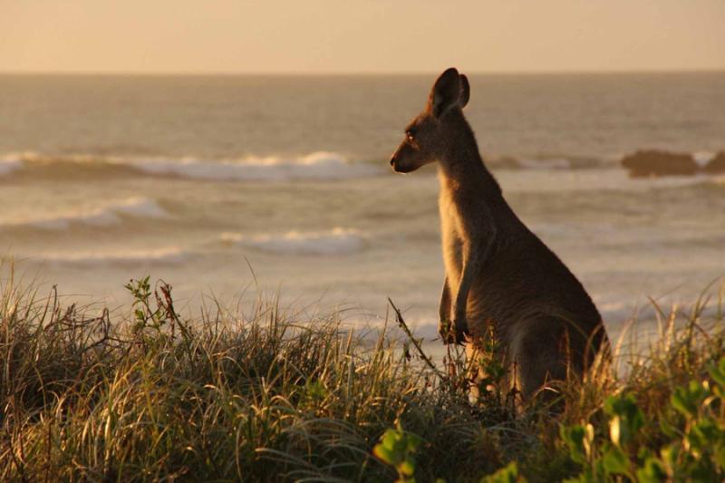 safaris in sydney australia