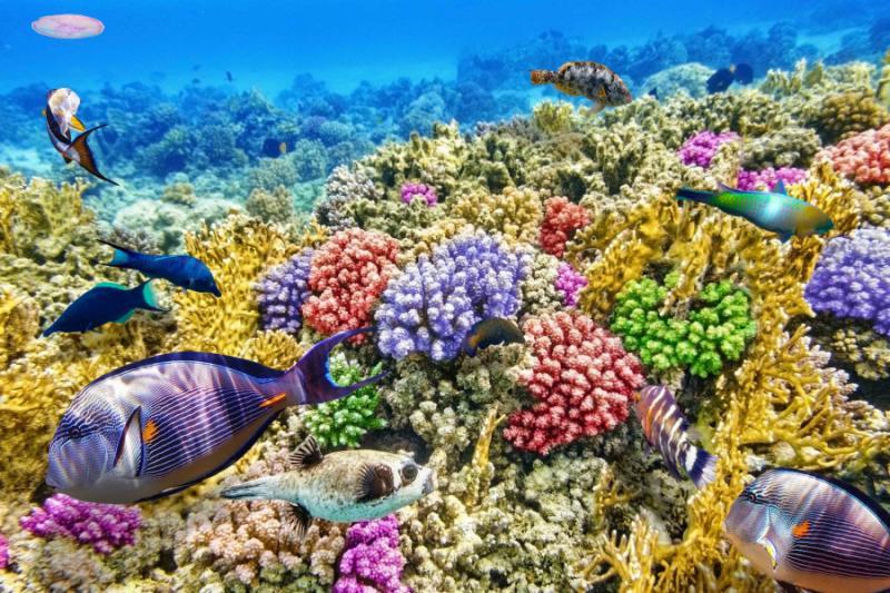 Australia Tours Great Barrier Reef