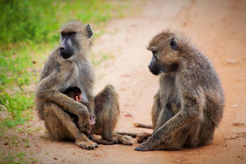 Exclusive Safari in Masai Mara's Private Conservancies ...