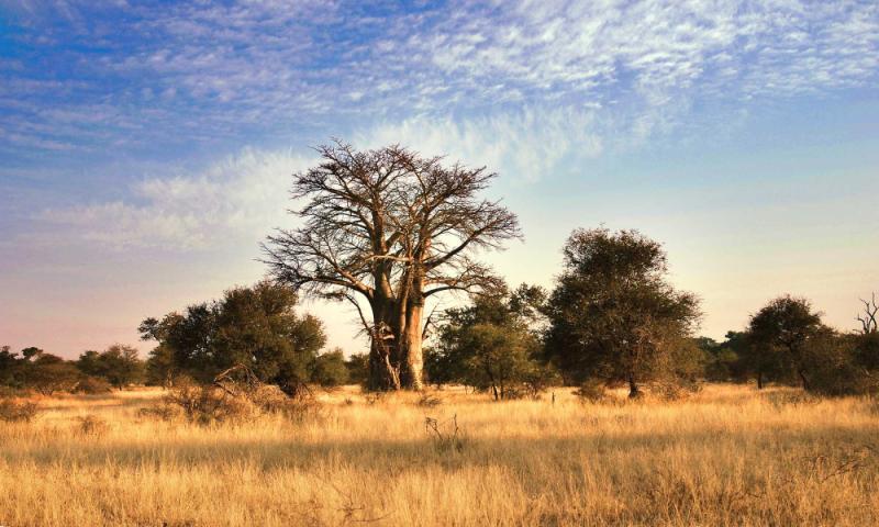 Multi Country Great Limpopo Transfrontier Park Safari