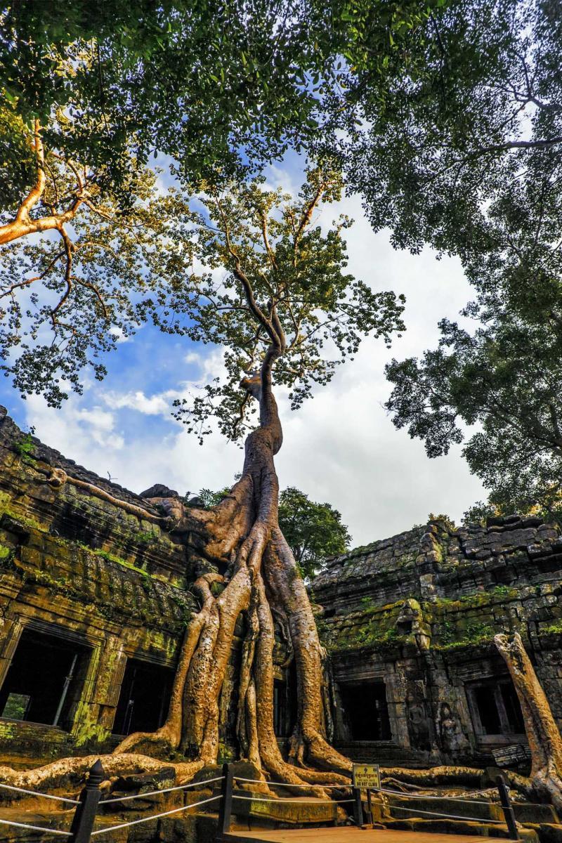 Cambodia & Angkor Wat Tours: Ancient Ruins & Vibrant