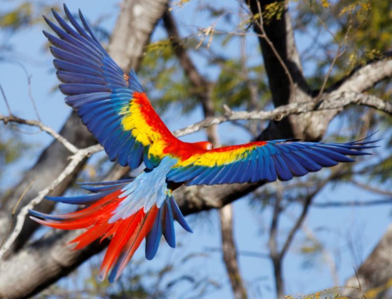The bird of pleasure 5 - 2 7