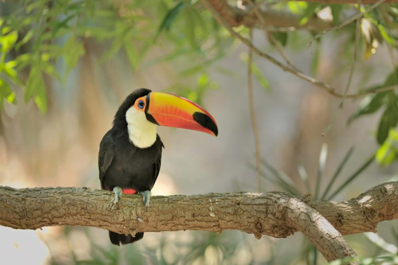 Rare Species Of Birds Volcanoes, Hot Springs...