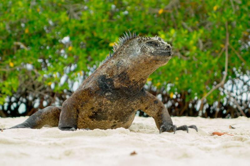 Bird Watchers Tour Of Galapagos And Ecuador