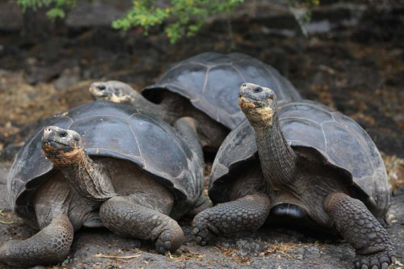 Galapagos Natural History Tour