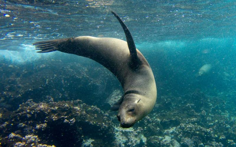 Galapagos Tour For Solo Travelers Island Hopping Amp Cruise Zicasso