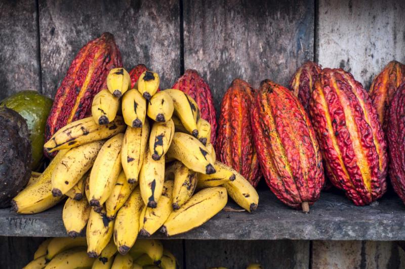 The Ultimate Culinary Tour of Ecuador: Indigenous Recipes to