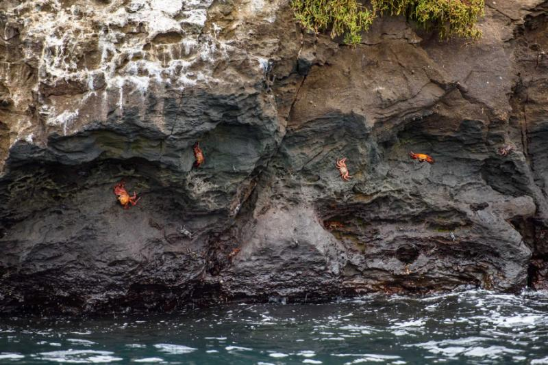 Ecuador Galapagos Islands Tour