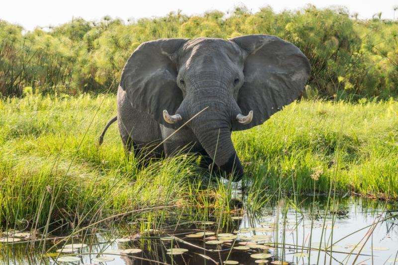 Exclusive Okavango Safari Premium Lodges Amp Unique