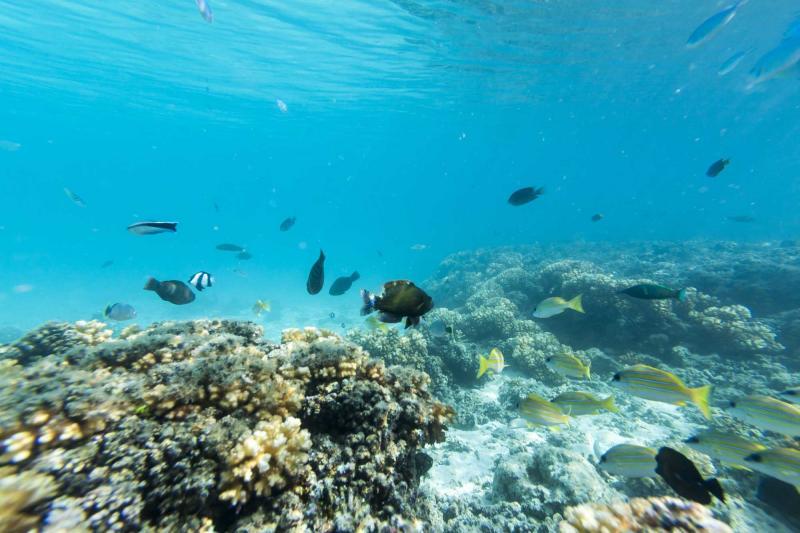 Fiji Vacation In Vanua Levu Island At The Award Winning