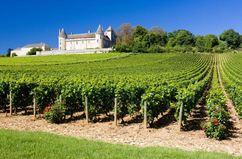 French Winery Tours From Paris