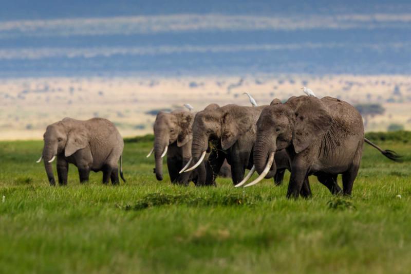 Signature Masai Mara Serengeti Great Migration Safari Zicasso