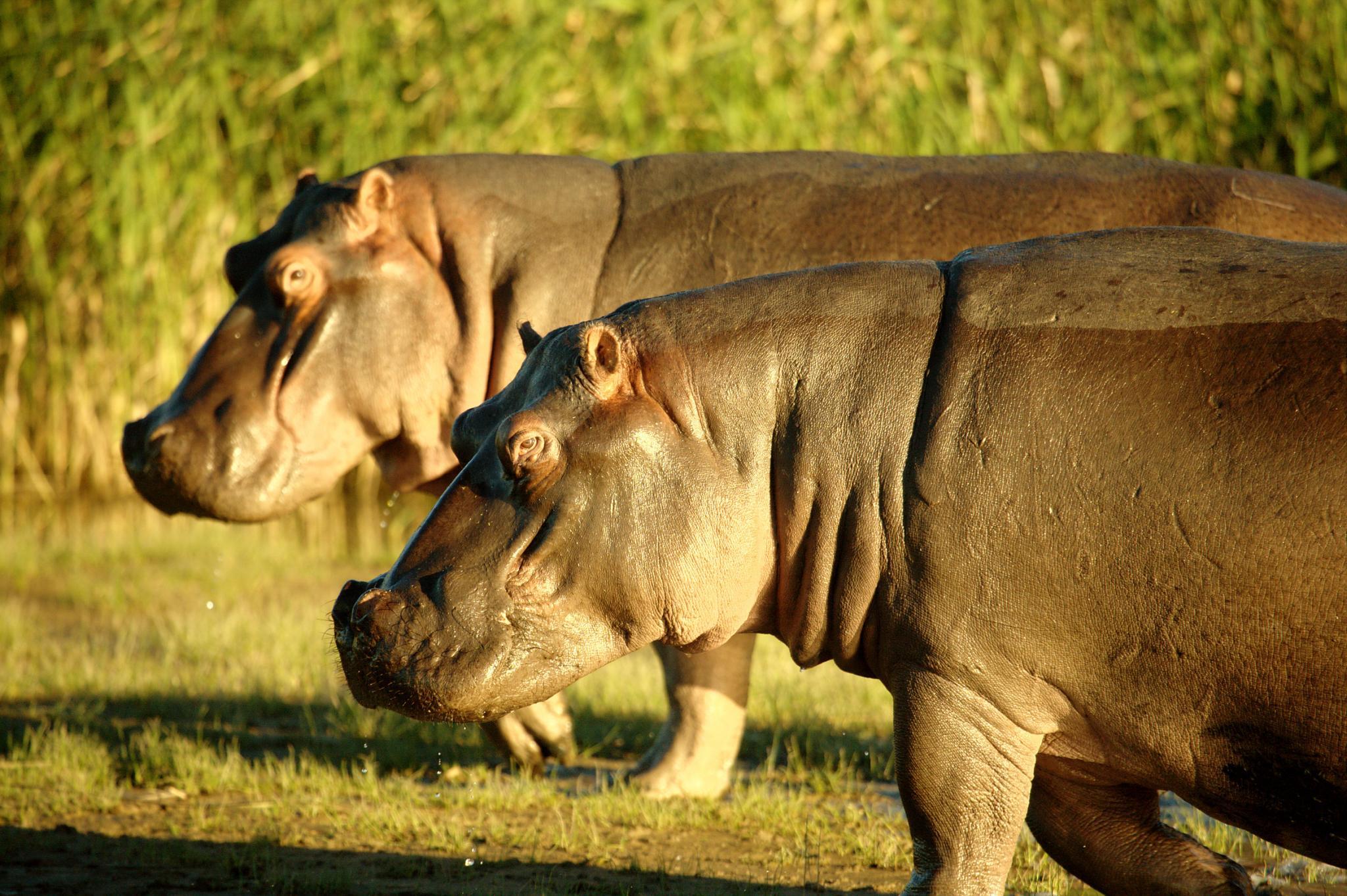 5 Star African Safari With Unique Zambezi Queen River