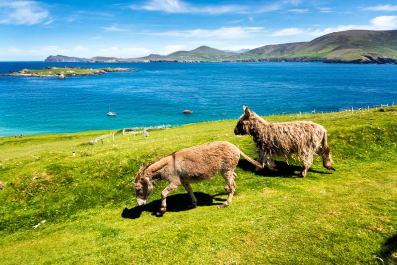 Exploring Ireland Tour Company