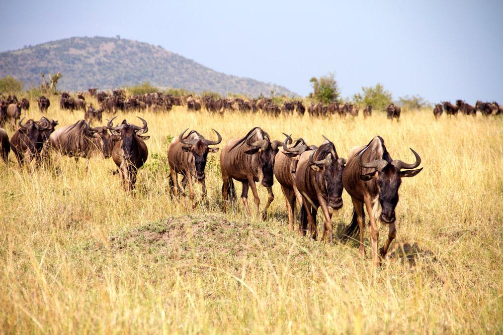 The Ultimate Stylish Safari Through Kenya Zicasso
