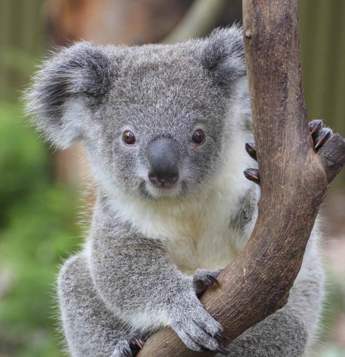 The Ultimate Australia...
