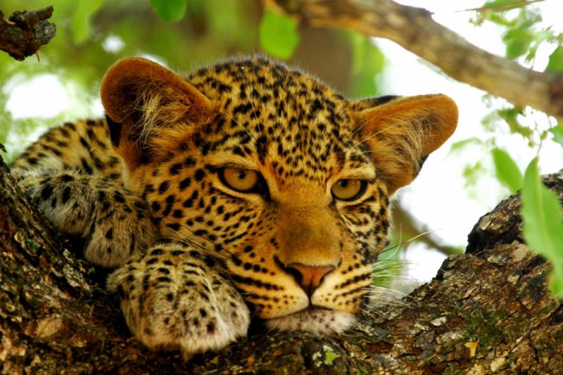 African Safari for Group & Incentive Travel | Zicasso