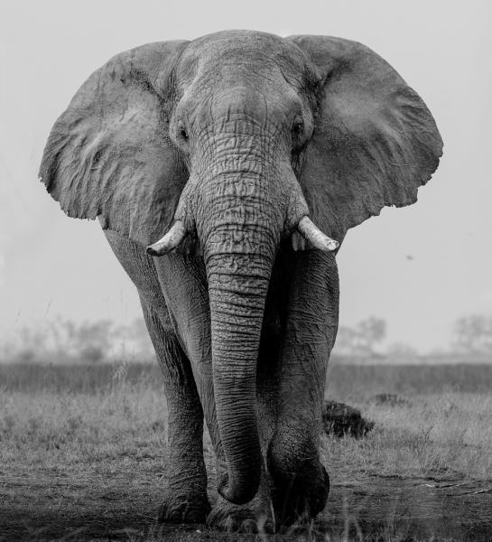 Serengeti Great Migration Safari: June to August | Zicasso