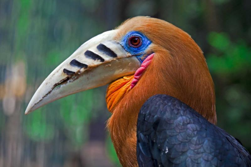 Myanmar Bird Watching Tour Zicasso
