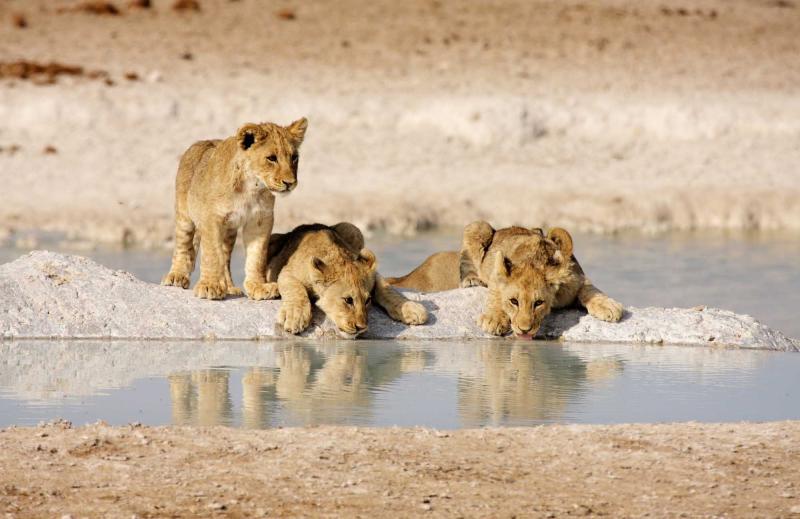 Highlights of Namibia Safari | Zicasso