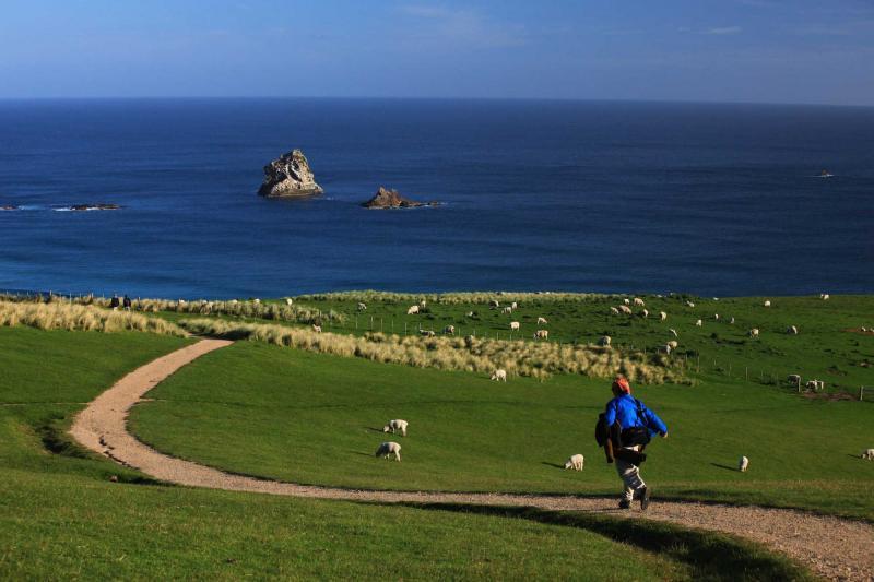 New Zealand Coastal Tour Christchurch Dunedin Milford