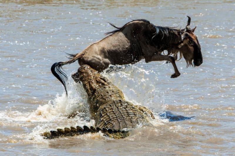 Serengeti Great Migration Safari June To August Zicasso