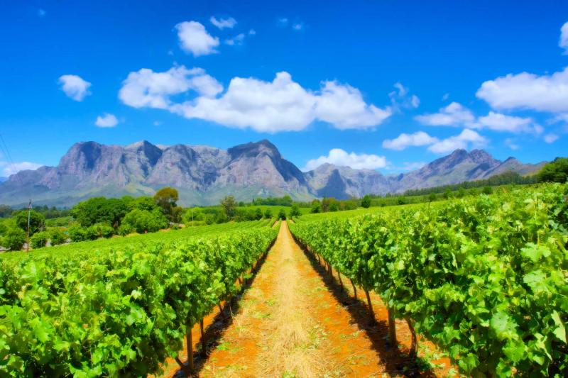 South Africa Tour Cape Town Winelands Garden Route