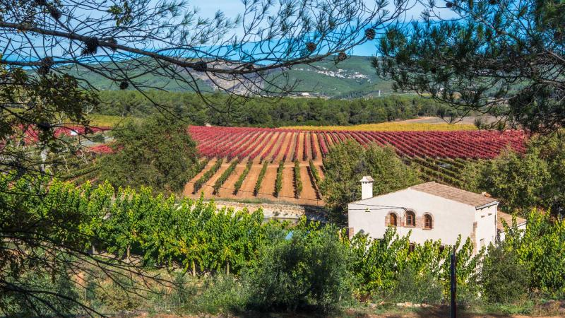 Spanish Vineyard Stock Images, Royalty-Free Images & Vectors ...