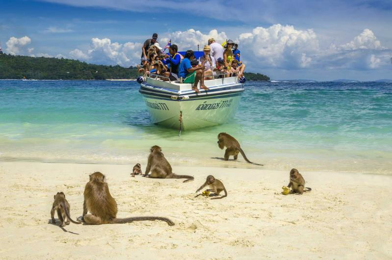 Monkey Island Georegtown