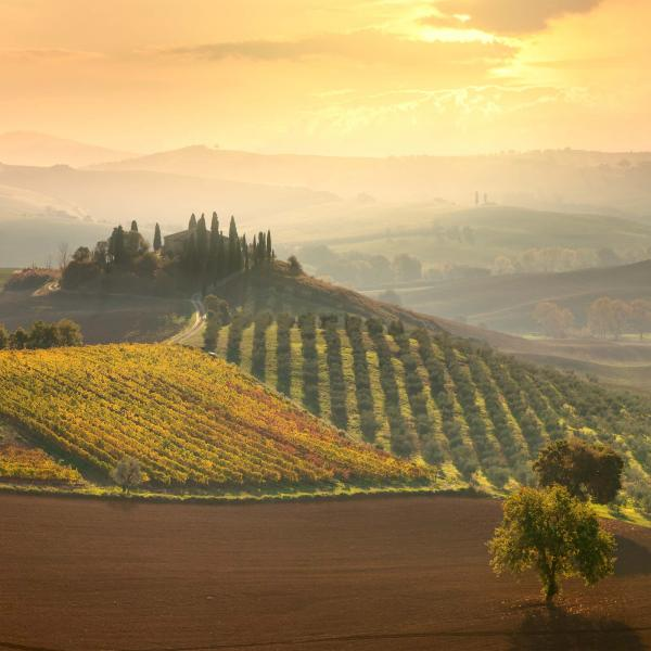 Morning in the Countryside of San Quirico d'Orcia, Tuscany, Italy. Credit: Shutterstock.