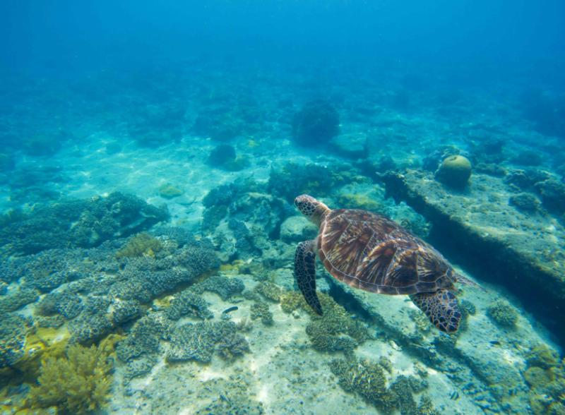 Traveling In Belize Reviews