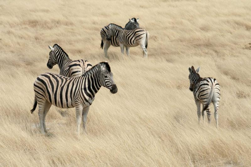 Rhino Africa Travel Agency