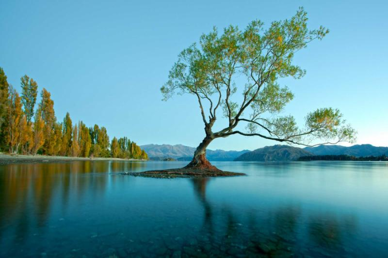 Best Travel Agent For New Zealand