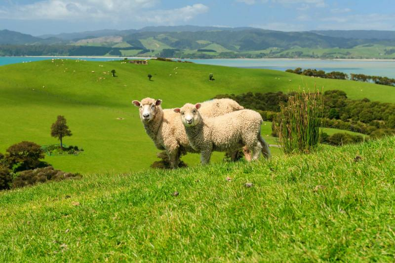 how to plan a vacation to australia and new zealand