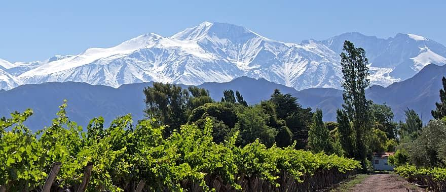 Vineyards in Mendoza, Argentina with the Andes in the background.