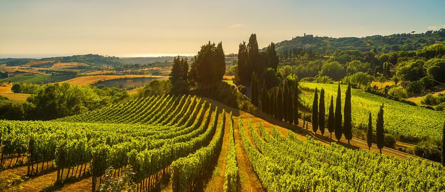 Vineyards and countryside landscape in Maremma, Tuscany, Italy