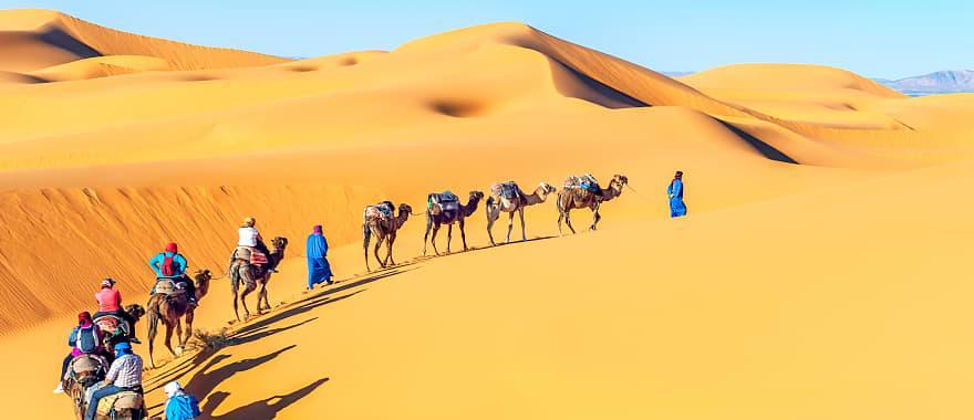 Camel caravan going through sand dunes in the Sahara Desert, Morocco