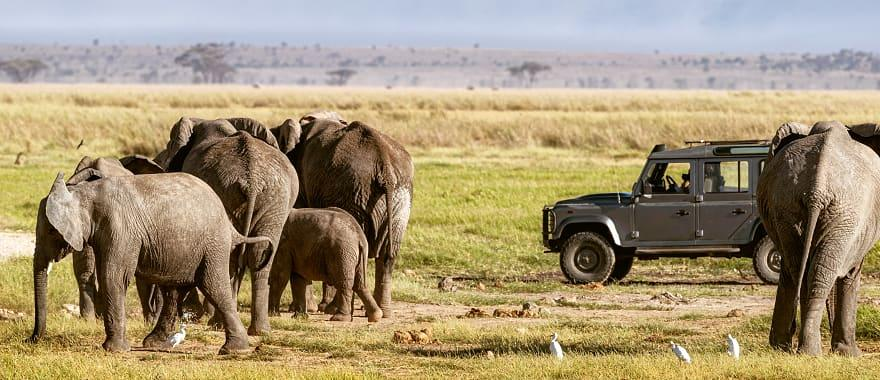 4X4 viewing a group of elephants.