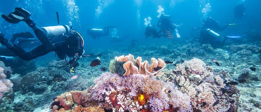 Scuba diving in Fiji Rainbow Reef, Corals and tropical fish.