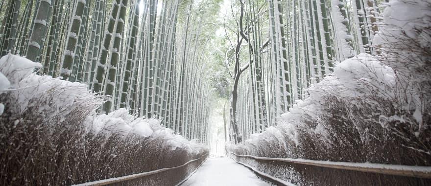 Arashiyama bamboo grove on a snowy winter day in Kyoto, Japan