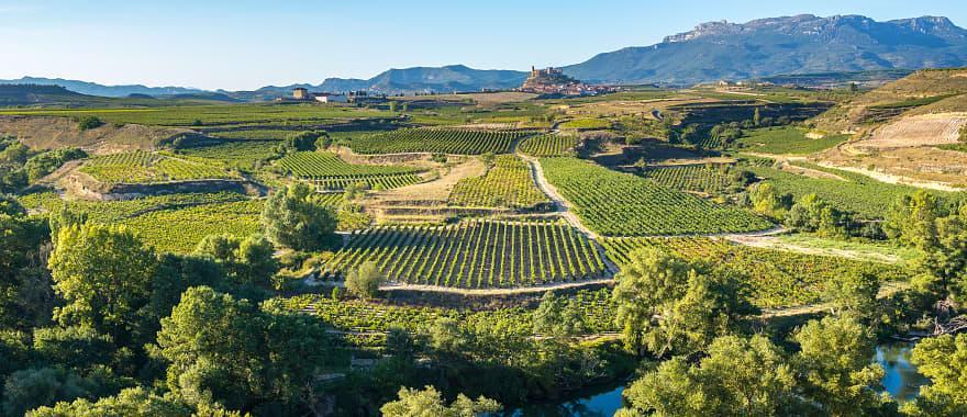 Vineyards in San Vicente de la Sonsierra, La Rioja Spain